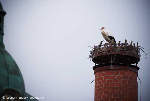 Storke and nest on chimney in Bavaria, Germany. Cody Duncan Photography