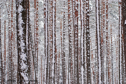 © cody duncan photography. snow covered trees in winter, germany