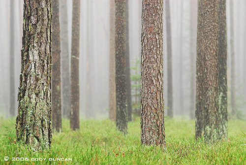 © Cody Duncan photography.  Foggy German Forest, Bavaria