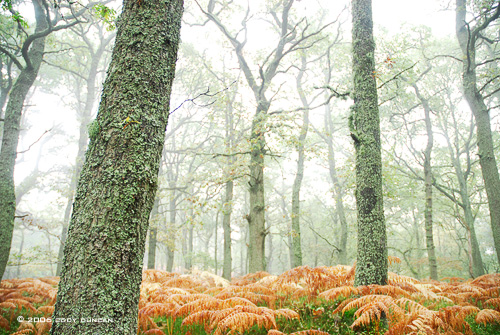 © Cody Duncan Photography. Foggy forest after rain near Pitlochry, Scotland