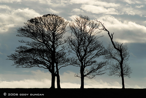 © Cody Duncan Photography.  Barren winter trees in Caernarfon, Wales