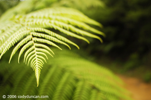 New Zealand travel photo: Fern along Queen Charlotte track.  © Cody Duncan Photography