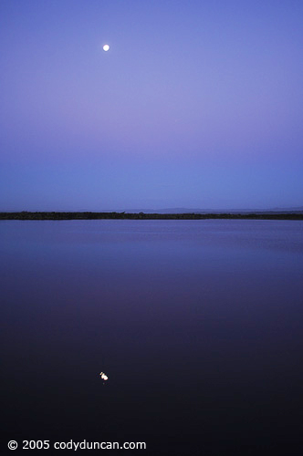 New Zealand Landscape photo: Okarito lagoon and reflection of full moon.  © Cody Duncan Photography