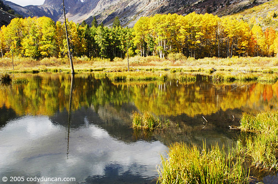 Cody Duncan Stock Photography: Autumn colored aspen trees reflecting in lake, Sierra Nevada Mountains, California. © Cody Duncan photography