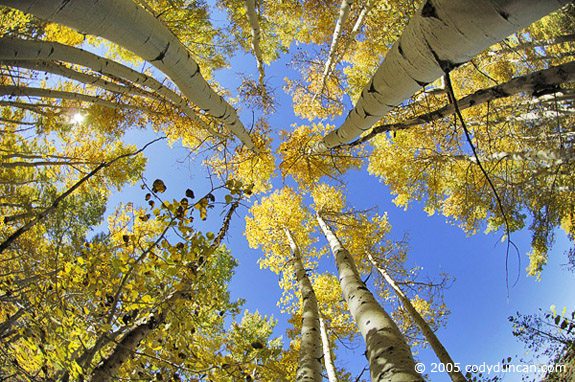 Cody Duncan stock photography: Autumn colors of Aspens in Sierra Nevada Mountains, California. © Cody Duncan photography