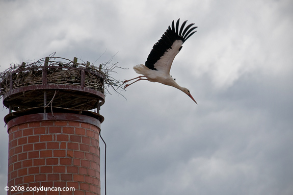 Cody Duncan Europe Stock travel photography: Stork on old Chimney, Germany