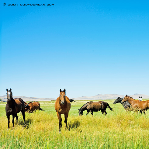 Cody Duncan Stock Photography: Herd of horses in field. © Cody Duncan Photography