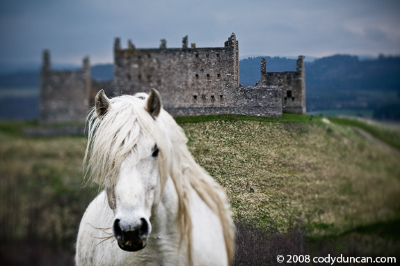 Cody Duncan Stock Photography: White horse and Ruined Building, Scotland. © 2008 Cody Duncan Photography