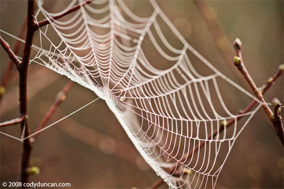 Cody Duncan Stock Photography: Spiderweb covered with morning dew