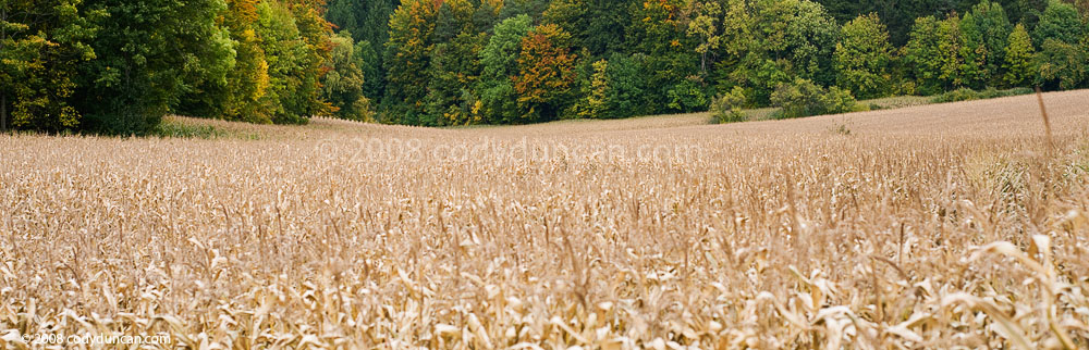 Germany Stock panoramic photography: Late autumn corn field and colorful trees, Franconia, Germany. Cody Duncan Photography