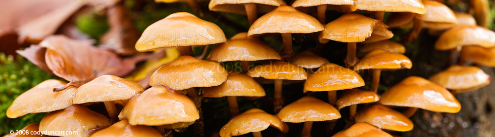 Nikon 85mm Tilt-Shift lens macro panoramic photo: Forest Mushrooms. Cody Duncan Photography