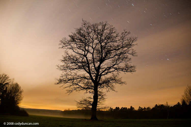 Cody Duncan travel stock photography: Leafless oak tree at night with star trails, Bavaria, Germany