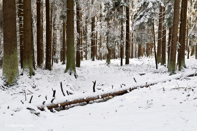 Landscape stock photo: snow covered forest, Oberpfalz - Bavaria, Germany