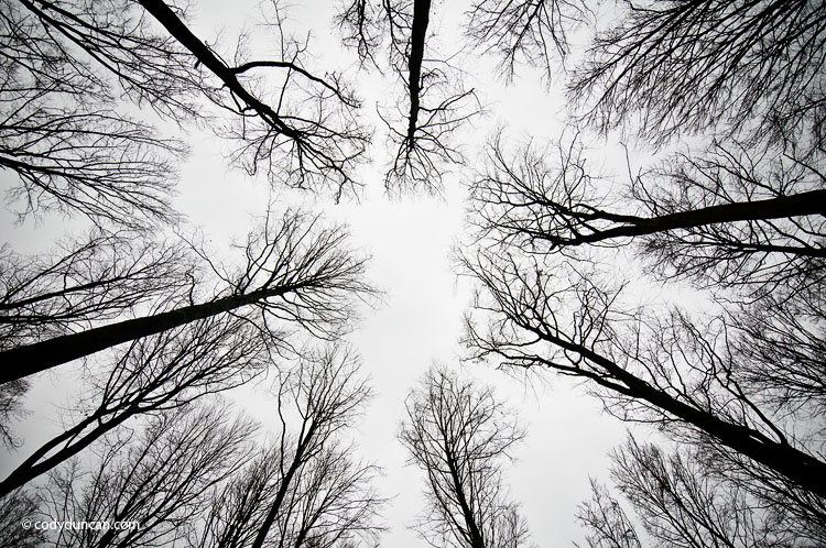 Stock photo: overcast skies and barren trees in winter, Germany