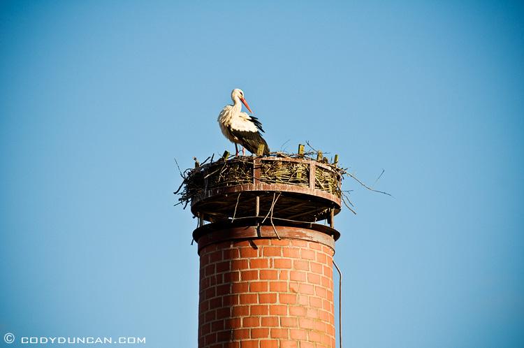 Stork nest on chimney, Bavaria, Germany