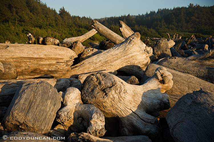 Prairie Creek Redwoods state park, California- Driftwood at Gold Bluffs Beach