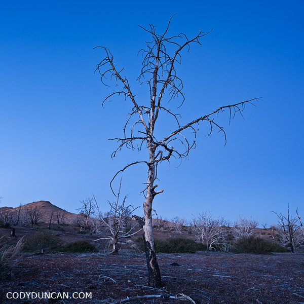 burnt tree, Mojave desert