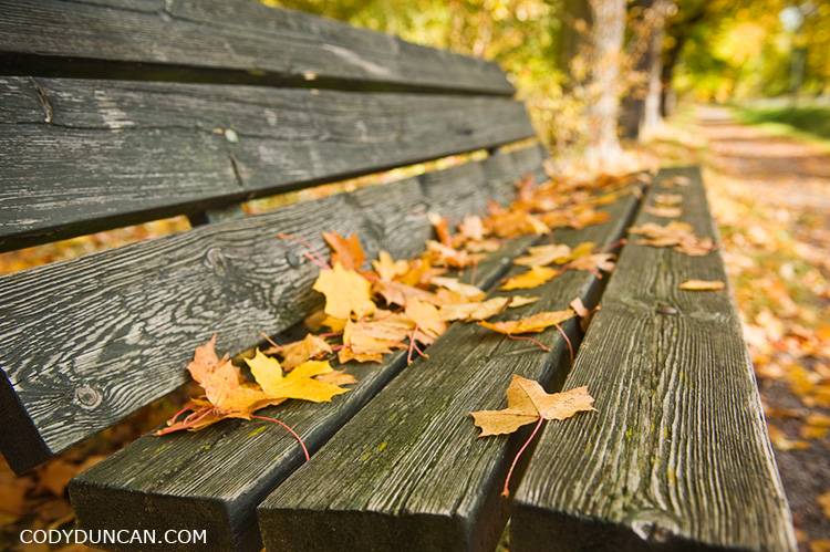 Wooden park bench with autumn leaves