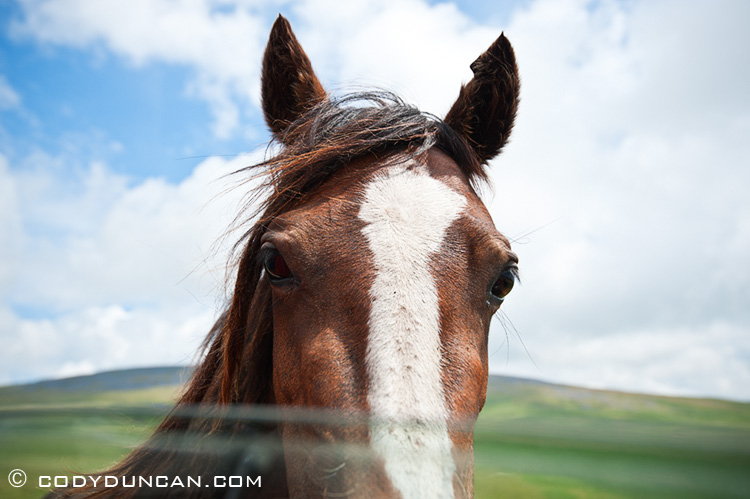 Welsh mountain pony, Black Mountain, Wales