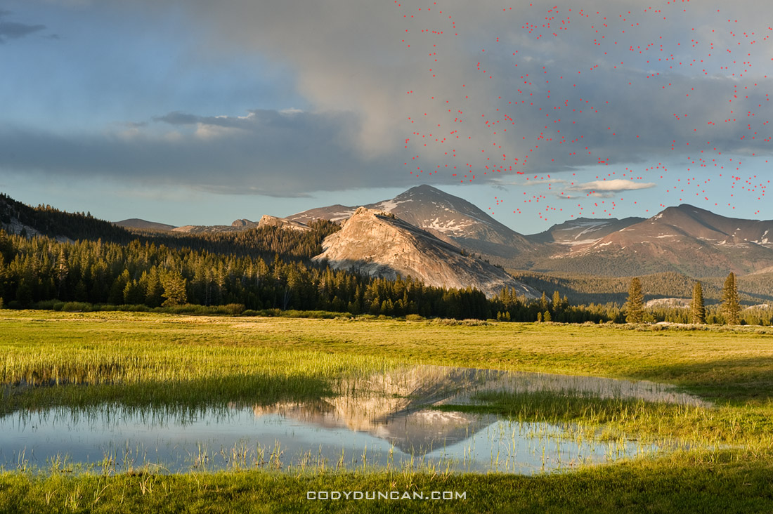 Tuolumne meadows mosquitos summer
