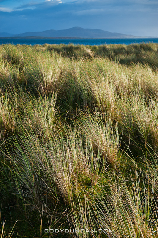 Dune grass, Berneray, Outer Hebrides, Scotland