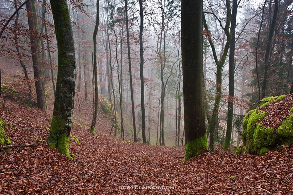 Fränkische Schweiz forest landscape