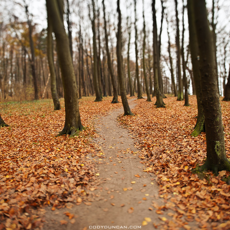 Forest trail, Warnemuende, Germany