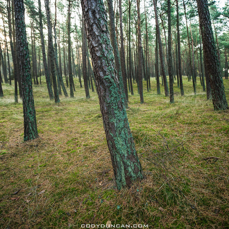 Forest Curonian Spit Lithuania