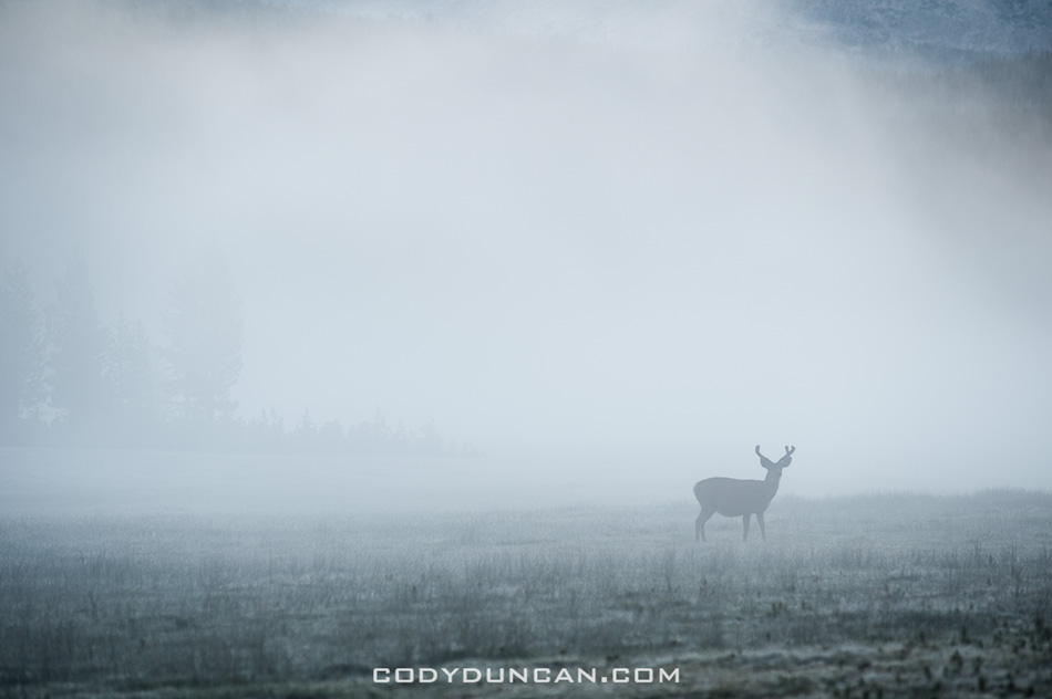 deer and mist, tuolumne meadows yosemite