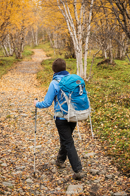 Hiking through autumn birch forest near Abisko at northern end of Kungsleden trail, Lappland, Sweden